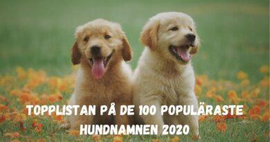 Topplistan på de 100 populäraste hundnamnen 2020